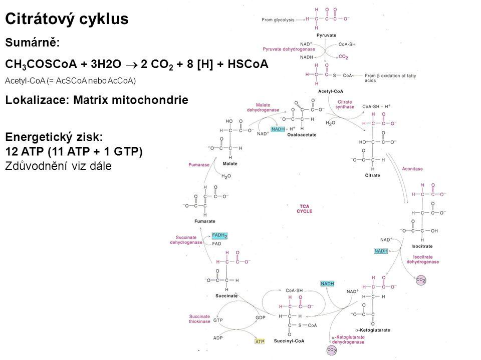 Citrátový cyklus Sumárně: CH3COSCoA + 3H2O  2 CO2 + 8 [H] + HSCoA